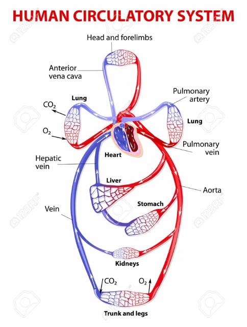 Cardio_p1
